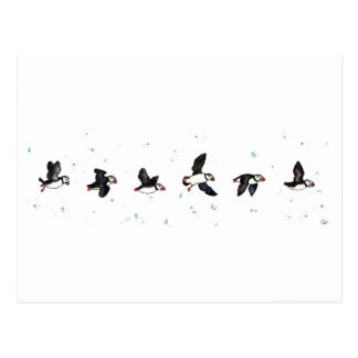 El volar lindo de los frailecillos postal