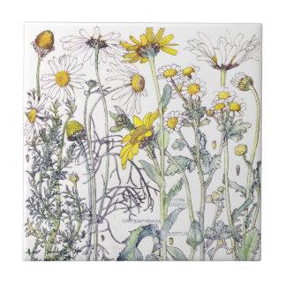 El Wildflower botánico del crisantemo florece la Azulejo