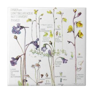El Wildflower del Butterwort del vintage florece Azulejo De Cerámica