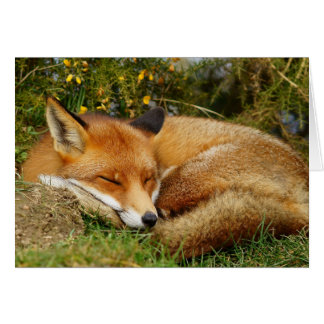 El zorro el dormir consigue la tarjeta bien