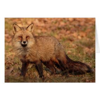El zorro sabe: Tarjeta de felicitación en blanco