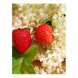 Elderflower y fresa tarjeta postal