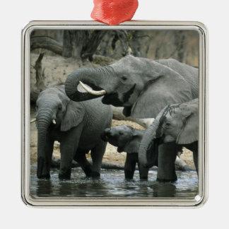 Elefante africano, (africana del Loxodonta), Adorno Cuadrado Plateado