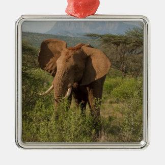 Elefante africano, africana del Loxodonta, en Ornamentos De Navidad
