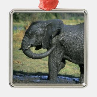 Elefante africano, (africana del Loxodonta), fango Ornamentos De Navidad