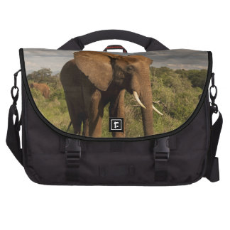Elefante africano, africana del Loxodonta, hacia f Bolsas Para Ordenador
