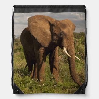 Elefante africano, africana del Loxodonta, hacia Mochilas