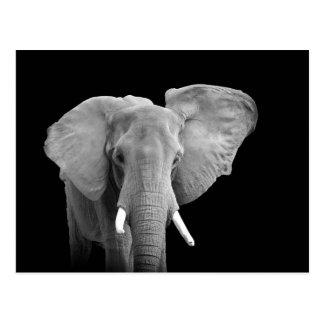 Elefante africano en negro - postal