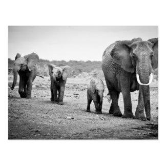 Elefante africano femenino y tres becerros, Kenia Postal