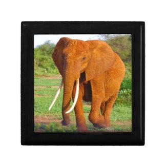Elefante anaranjado hermoso joyero