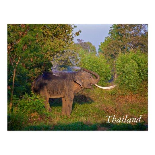 Elefante de Tailandia que sorprende Postal