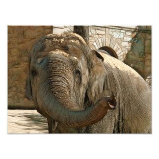 Elefante que señala adelante con el tronco foto