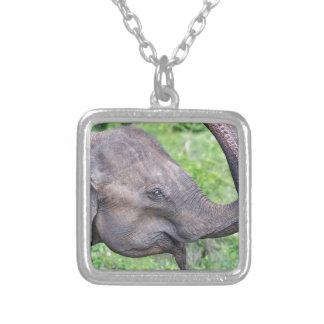 Elefante, Udawalawe, Sri Lanka Collar Plateado