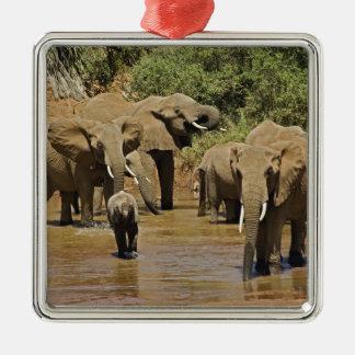 Elefantes africanos, Loxodonta Africana, Samburu Adorno De Reyes