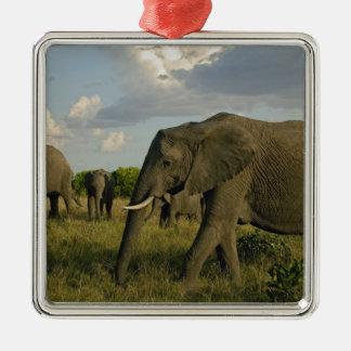 Elefantes africanos que pastan, africana del Loxod Ornatos