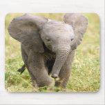 Elephant Baby Mousepad