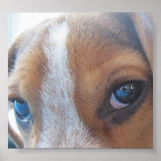 En ellos ojos de un perrito póster