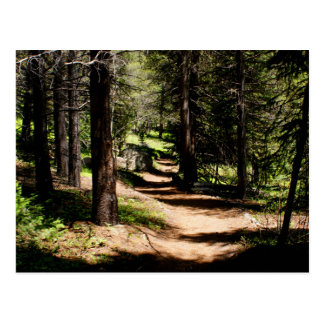 En la postal de los pinos - caminando cerca del