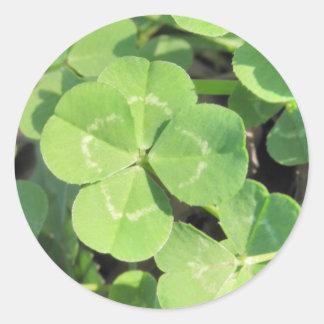 Encanto de buena suerte del trébol de 4 hojas etiqueta redonda