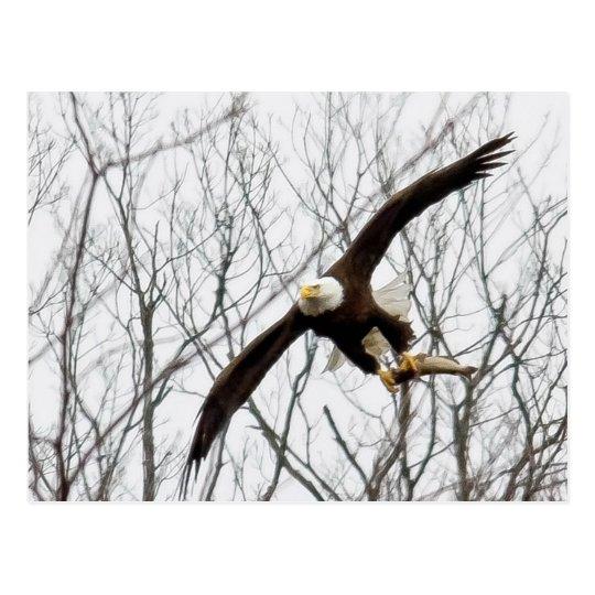 Entrega de la comida de Eagle calvo Postal