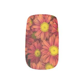 Envolturas Para Uñas Arte rosado del clavo de las margaritas, clavos