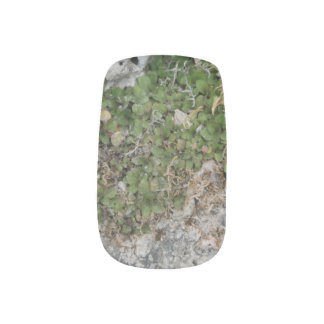 Envolturas Para Uñas Planta rocosa