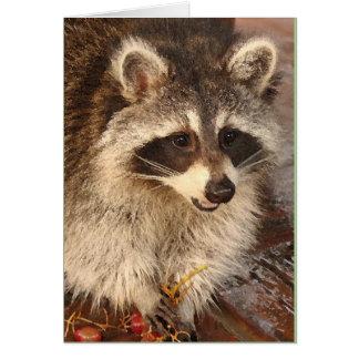 Equipo del mapache con la tarjeta de nota en