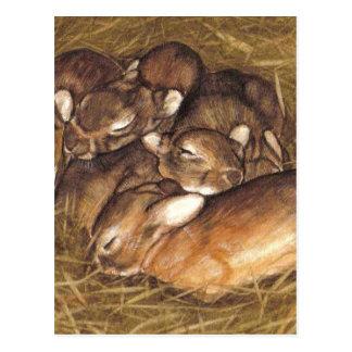 equipos de los conejos del bebé en arte de la postal