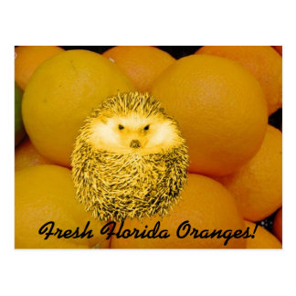 Erizo anaranjado fresco postal