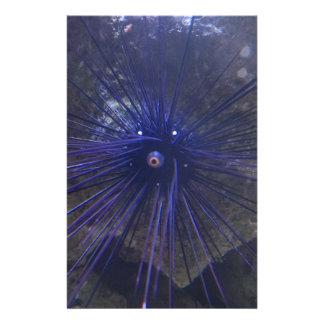 Erizo de mar negro y azul papelería