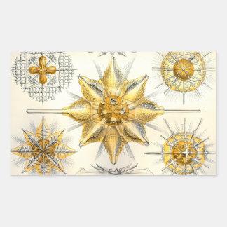 Ernst Haeckel Acanthometra Pegatina Rectangular