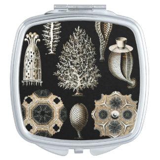 Ernst Haeckel Calcispongiae Espejo Para El Bolso