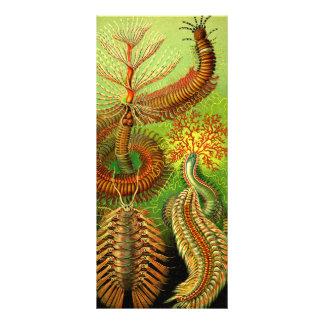 Ernst Haeckel Chaetopoda Tarjetas Publicitarias