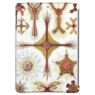 Ernst Haeckel Discoidea