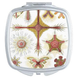 Ernst Haeckel Discoidea Espejos Maquillaje