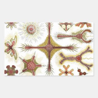 Ernst Haeckel Discoidea Pegatina Rectangular