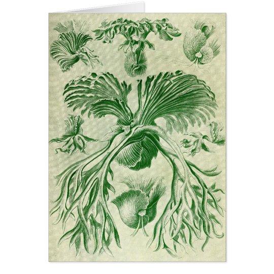 Ernst Haeckel - Filicinae Tarjeta De Felicitación