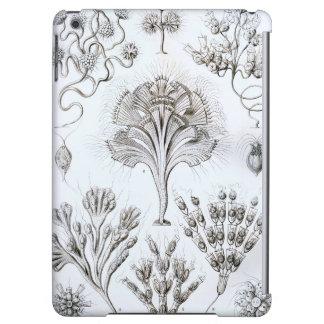 Ernst Haeckel Flagellata