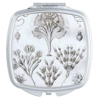 Ernst Haeckel Flagellata Espejo Compacto