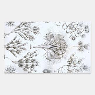 Ernst Haeckel Flagellata Pegatina Rectangular