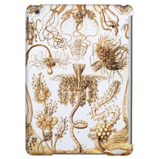 Ernst Haeckel Tubulariae