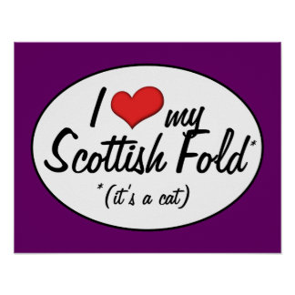 ¡Es un gato Amo mi doblez escocés Poster