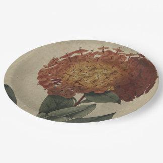 Escarlata Ixora Plato De Papel