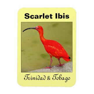 Escarlata rojo Ibis de Trinidad and Tobago Iman