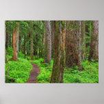 Escénico de bosque del viejo crecimiento posters