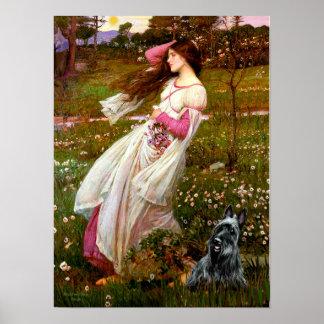 Escocés Terrier 3 - Windflowers Póster