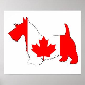 Escocés Terrier Canadá Póster