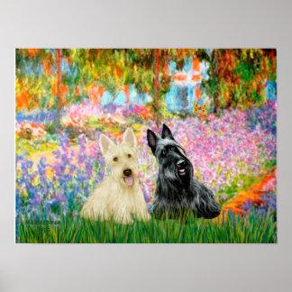 Escocés Terrier (dos BW) - jardín Póster