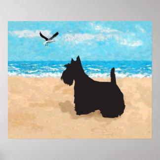 Escocés Terrier y gaviota Póster