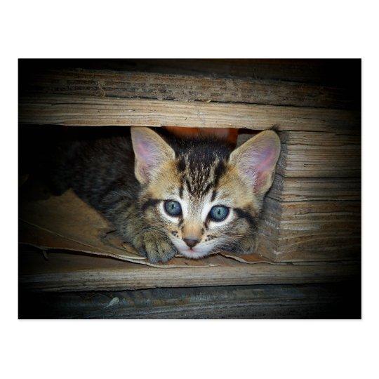 Escondite del gatito postal